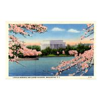 Image: Lincoln Memorial and Cherry Blossoms, Washington, D. C.