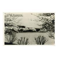 "Image: ""The Blossoms"" Washington, D.C."