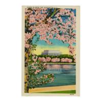 Image: Cherry Blossom Time, Washington, D. C.