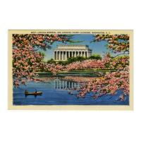 Image: Lincoln Memorial and Japanese Cherry Blossoms, Washington, D. C.