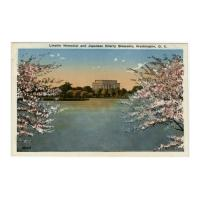 Image: Lincoln Memorial and Japanese Cherry Blossoms, Washington D. C.